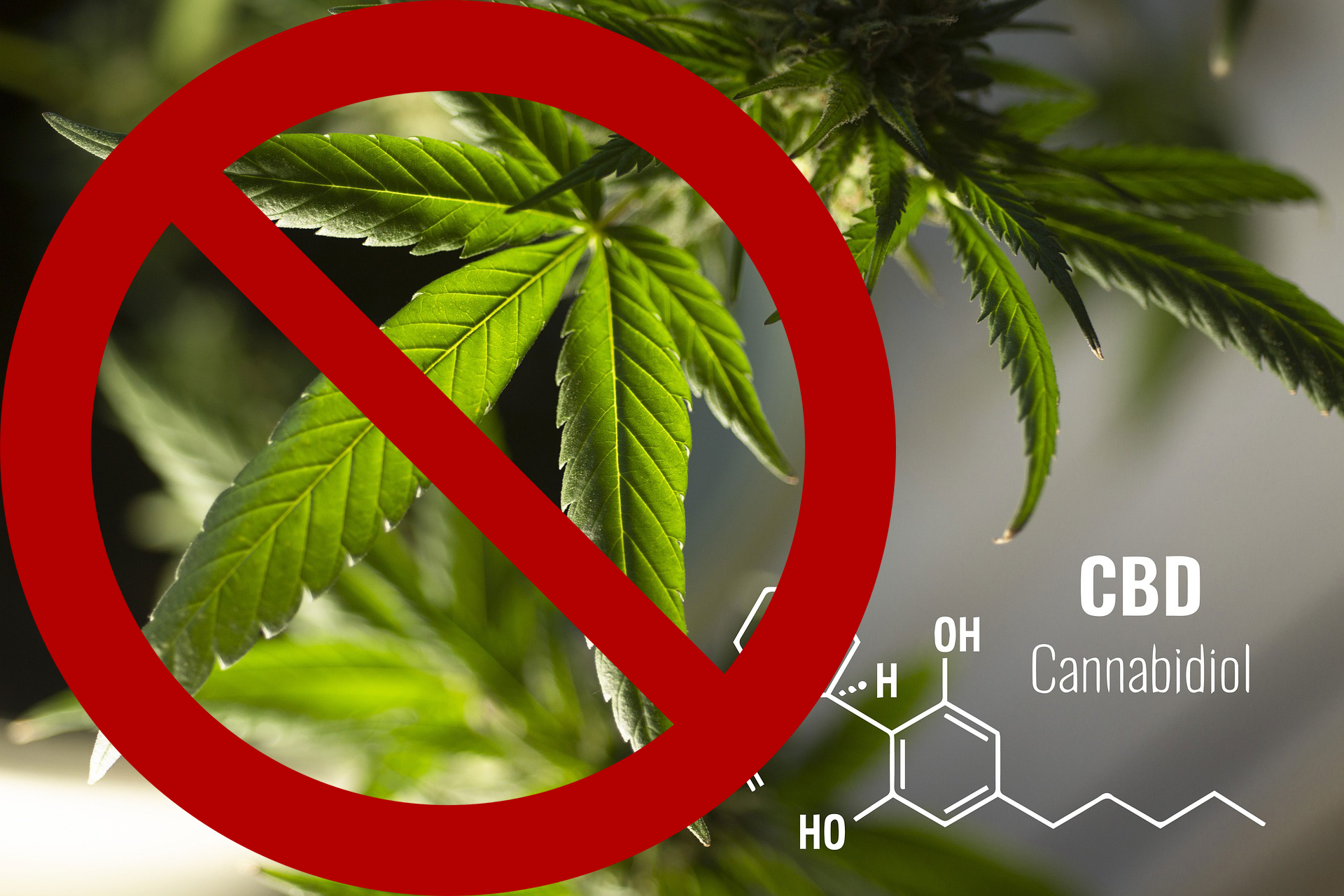 CBD will be Banned in China